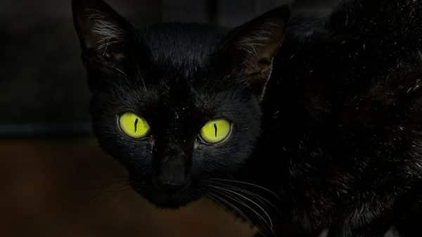 kot przysłowia wróżby podania kultura ludowa