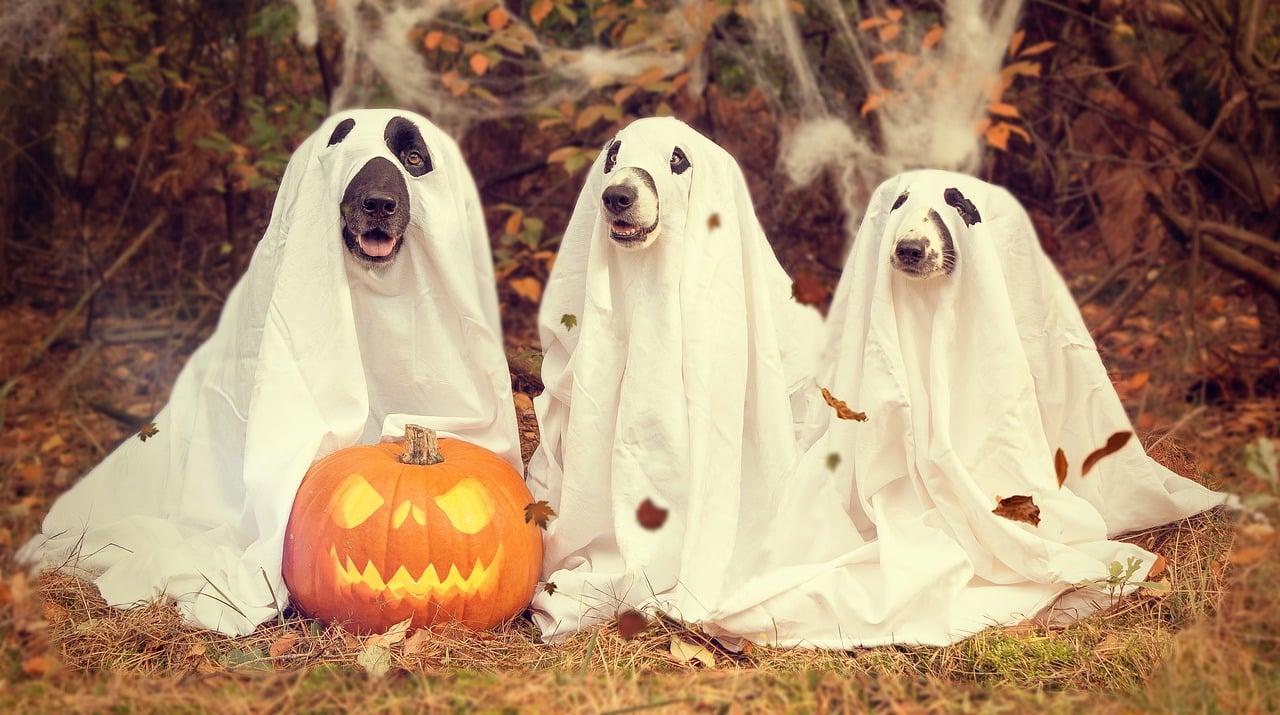 duch pies halloween