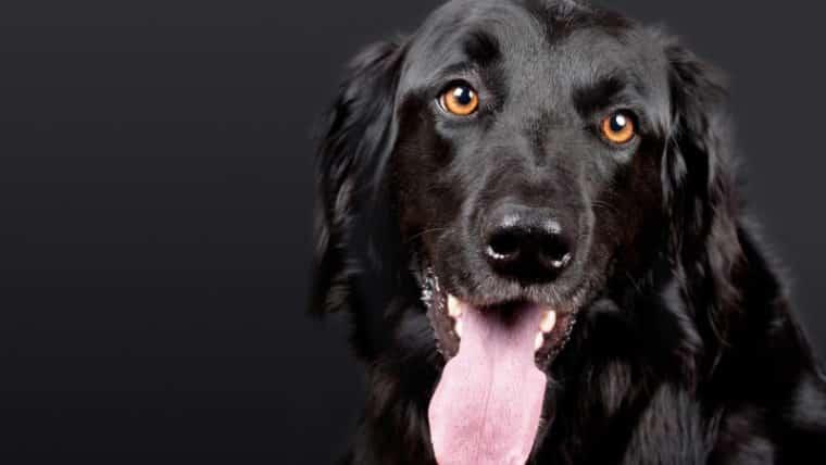 psy w kulturze wierzenia słowiańskie
