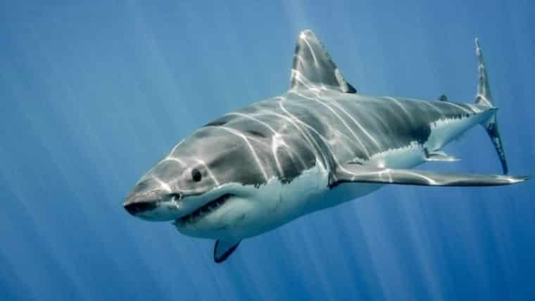sharksploitation, filmy o rekinach, pyrkon, festiwal fantastyki pyrkon